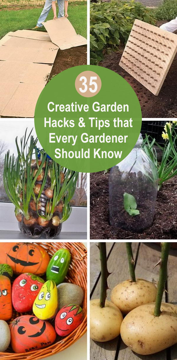 35+ Creative Garden Hacks & Tips That Every Gardener Should Know.