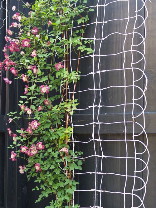 DIY Trellis Using Wire Fencing.