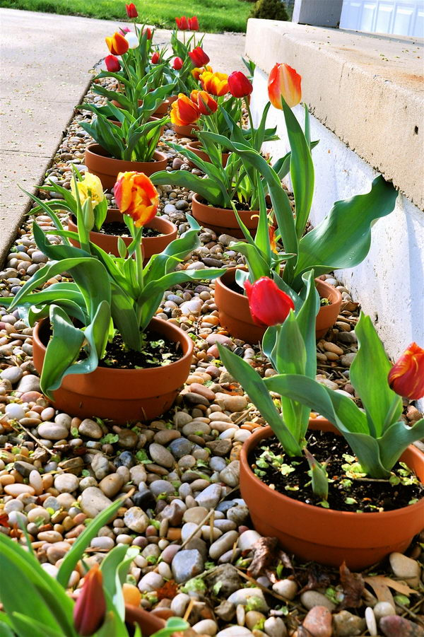 Beautify Your Outdoor Decor Using Pots Planted at the Border.