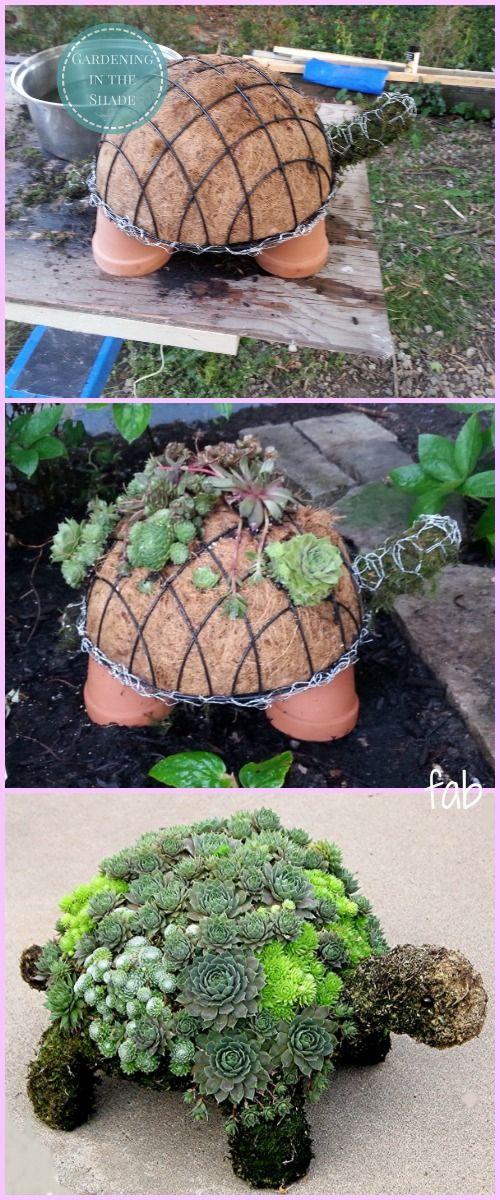 DIY Succulent Turtle.