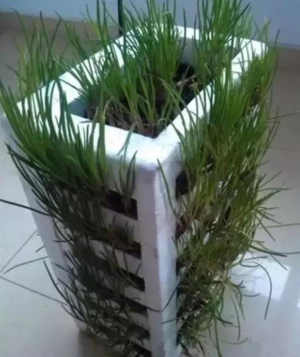 Easy DIY Planter Made Out Of Foam Box
